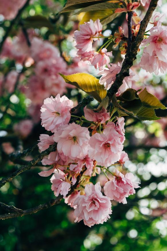 Motiv 050 - Blüten