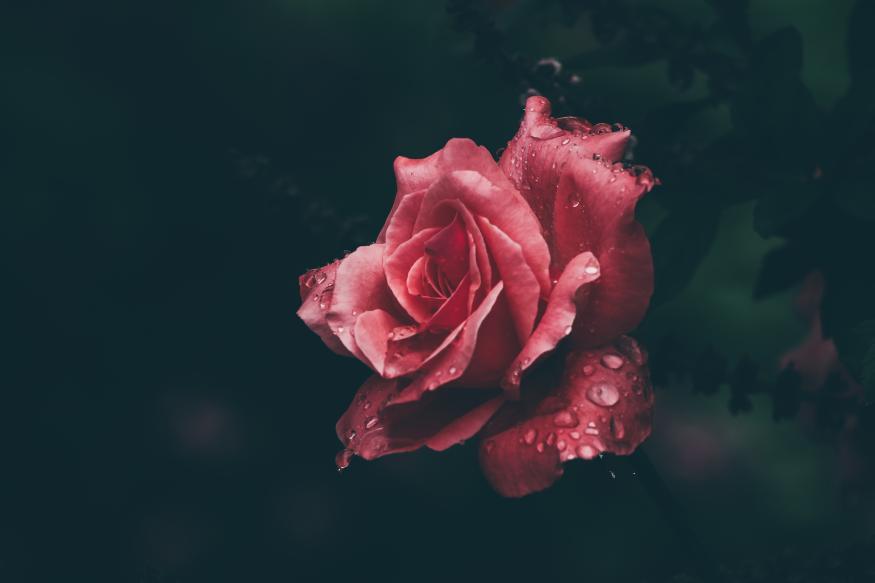 Motiv 021 - Rose